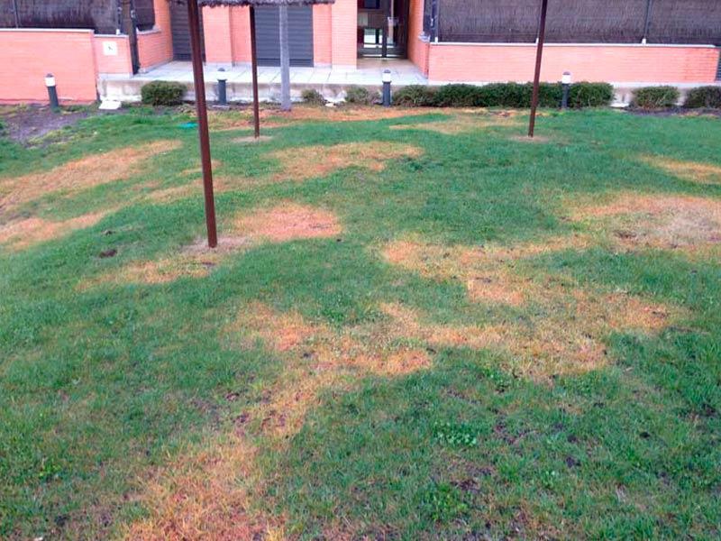 Como plantar cesped natural elegant como plantar csped - Como sembrar cesped natural ...