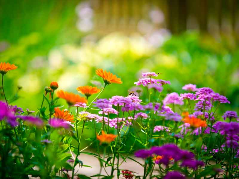 cuidar jardin en verano diseño de jardines